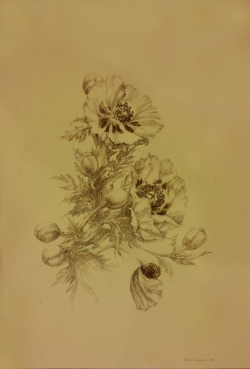 Poppies - Gohar Tumasyan