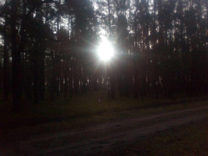 Sunny woods - Noaarts