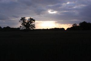 quiet golden hour