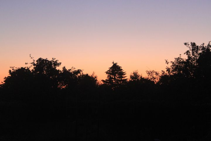 fairytail sunset with trees - Noaarts