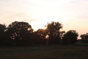 golden hour oaks