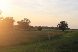 golden hour mist