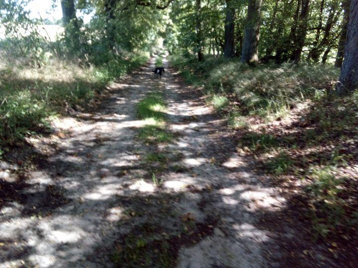 Alte Wege /old paths - Noaarts