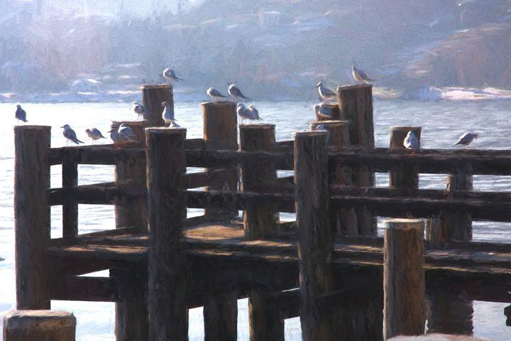 Birds in the morning - Roberto Giobbi