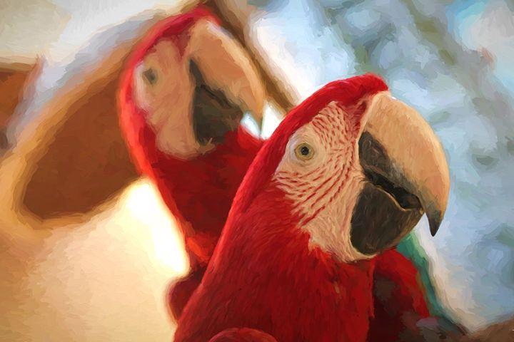 Parrots - Roberto Giobbi
