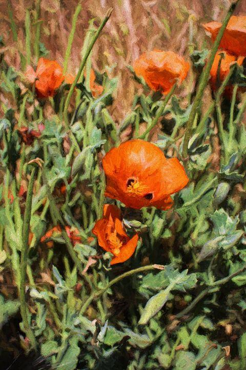 flowers in the field - Roberto Giobbi