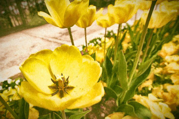 Yellow Tulip - Roberto Giobbi