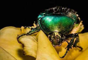 Beetle - Neil Sudhakar
