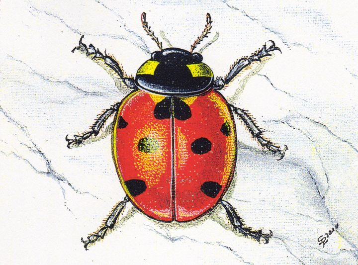 Ladybug in Miniature - Pia's Contemporary Art Collection