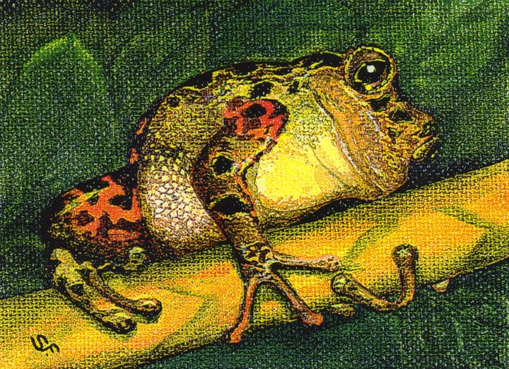Fat Frog - Pia's Contemporary Art Collection