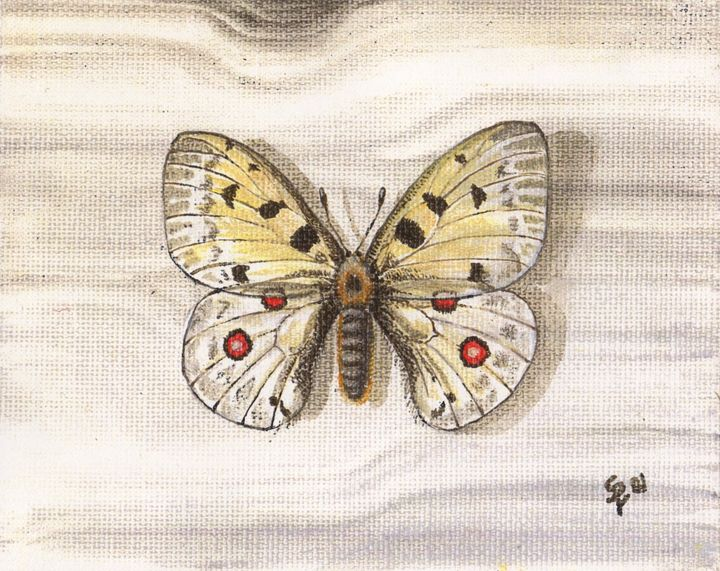 Butterfly on Board - Pia's Contemporary Art Collection