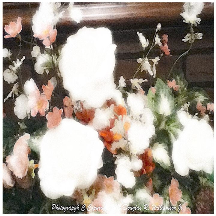 Glow Diffused Design 12 x 12 - White Flower Guys