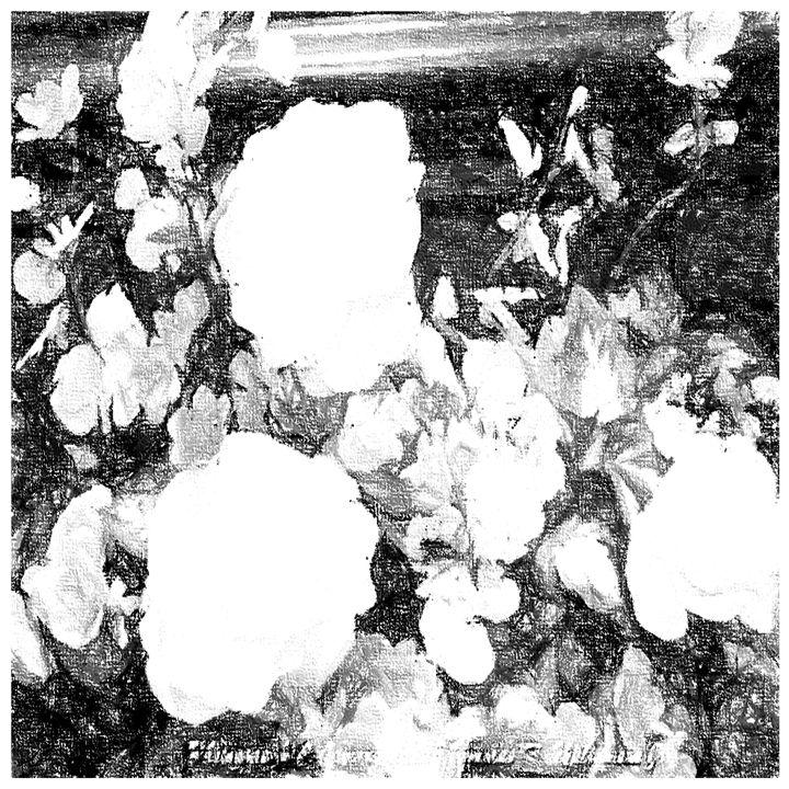 Pencil Sketch Design - White Flower Guys