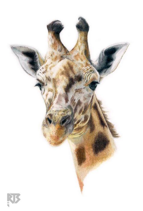 Giraffe - R J Smith