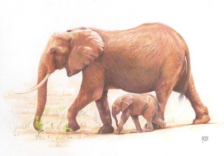 Elephants - R J Smith