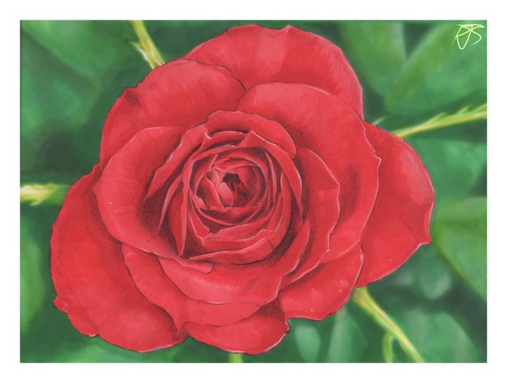 Rose - R J Smith