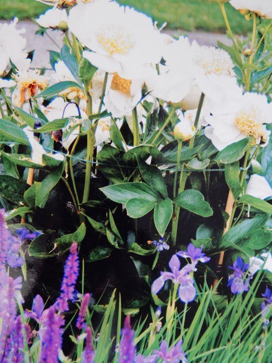 Flower - Sylvia Kaye