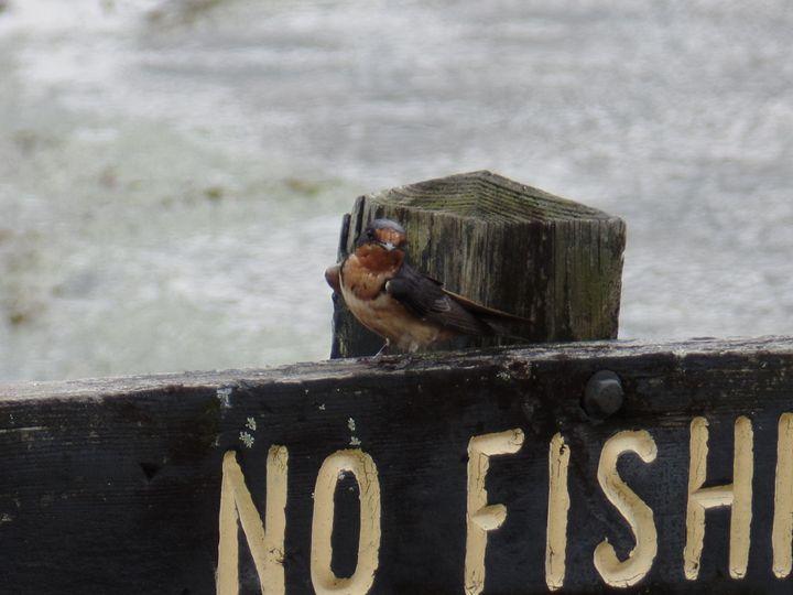 No Fishing - InkSpot Original Art