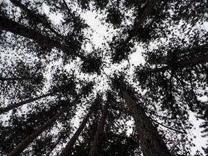 Looking Up - InkSpot Original Art