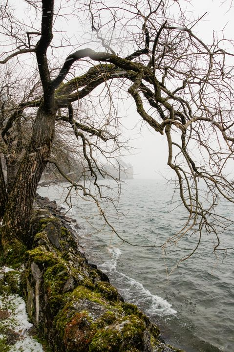 Branches of a tree above the water. - German S