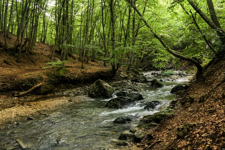 The banks of the forest river. - German S