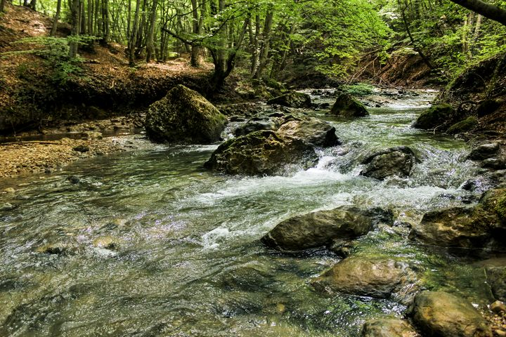 Rocky mountain river in the forest. - German S