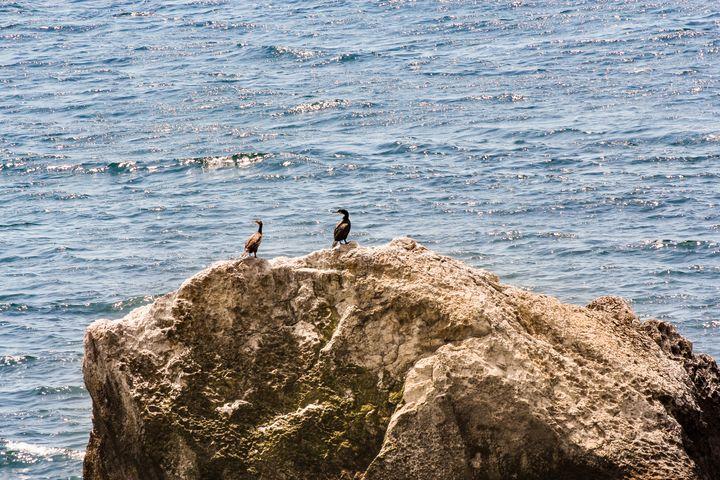 Cormorants on a rock. - German S