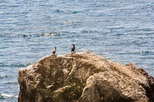 Cormorants on a rock.