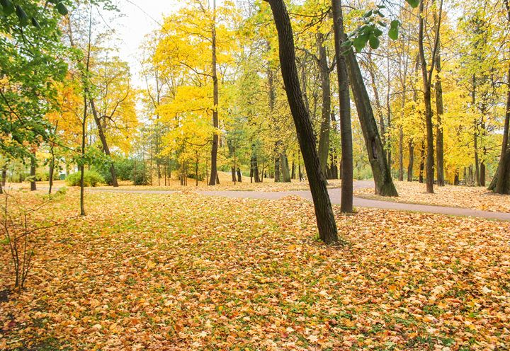 Yellow autumn park. - German S