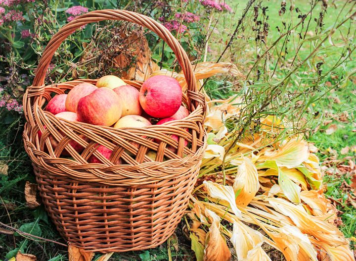 Basket with apples. - German S
