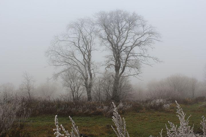 Tree in a fog. - German S