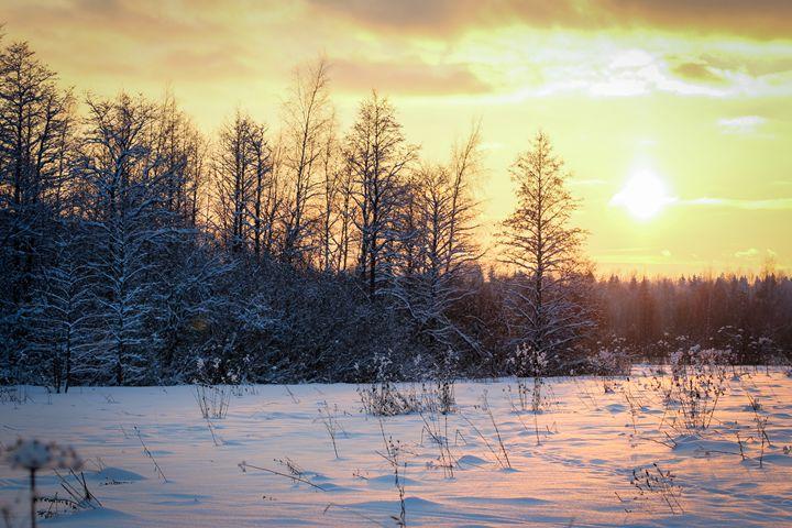 Evening winter landscape. - German S