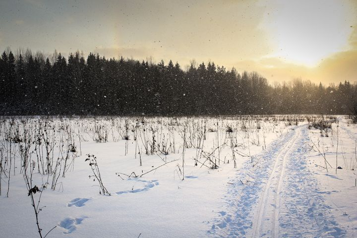 Snowfall in the field. - German S