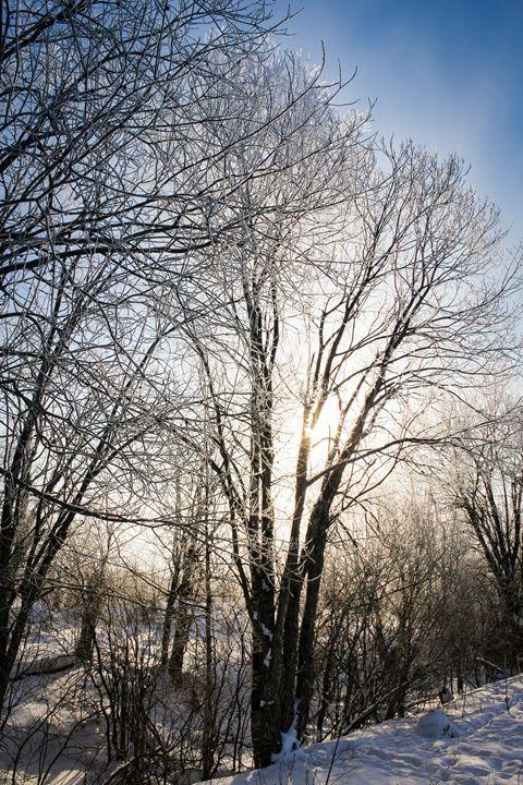 A sunlit tree in a frost. - German S