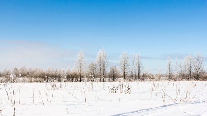 Winter field landscape. - German S