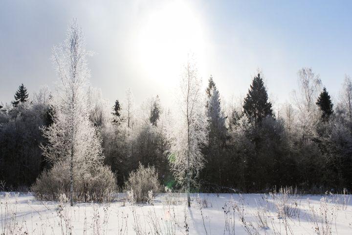 The sun illuminates the frosty fores - German S