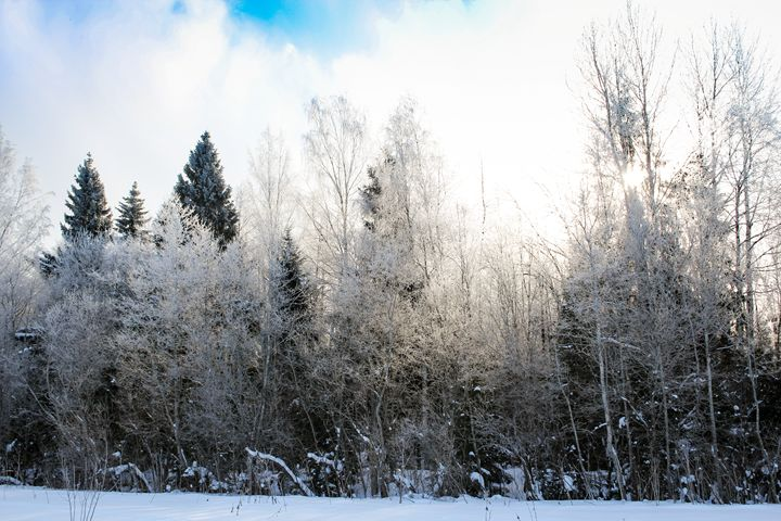 Hoarfrost on the trees in the forest - German S