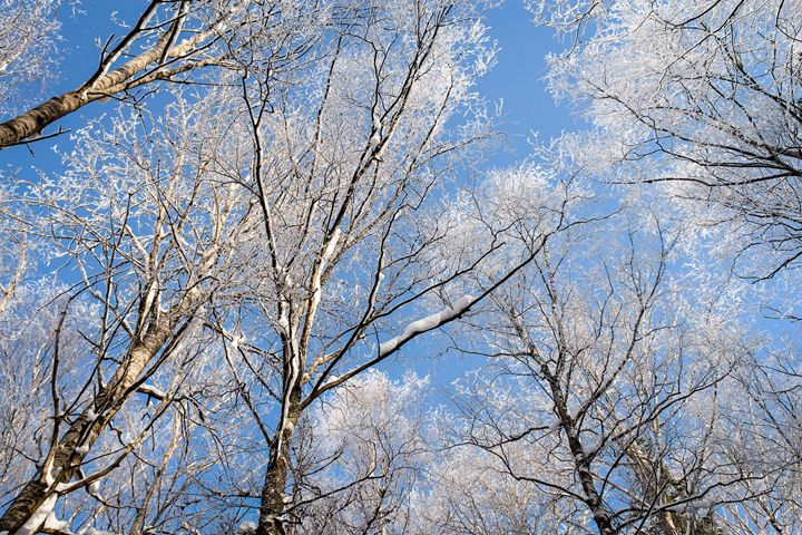 A crystal frost on the trees. - German S