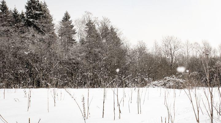A dense winter snowfall. - German S