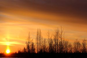 Silhouettes of trees at sunset.