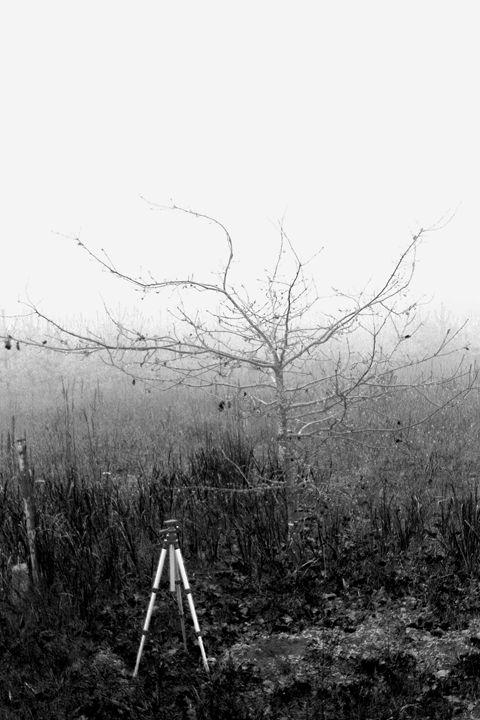 Cold Fog - Martin's Gallery
