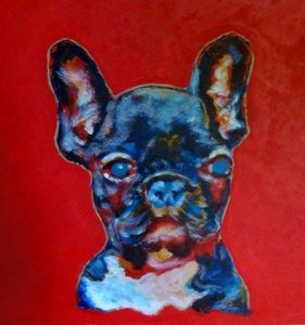 Blue Boston terrier