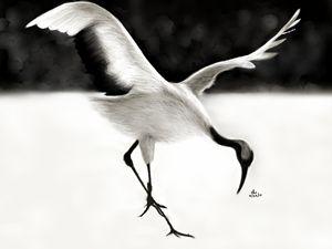 Crane - Che Guiruela