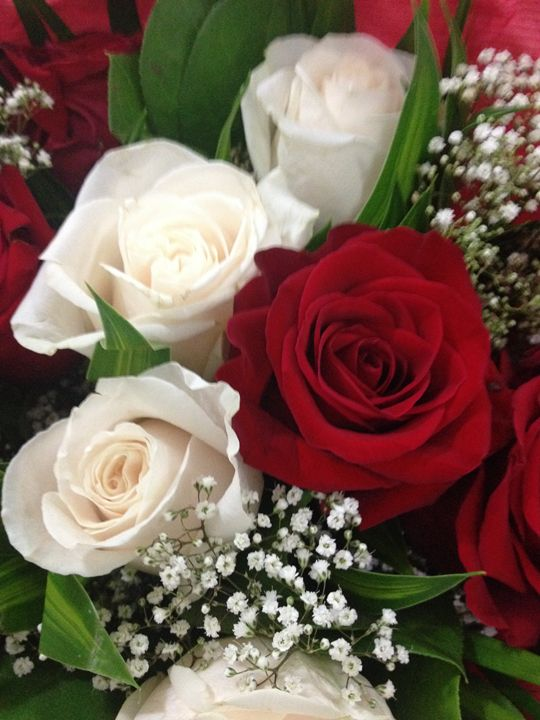 Roses -  Bermudez.ruth