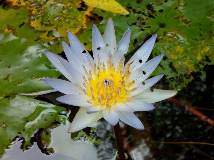 White lily - kundan