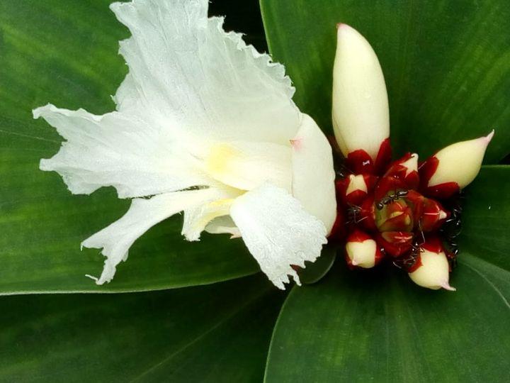Half blossom.. - kundan