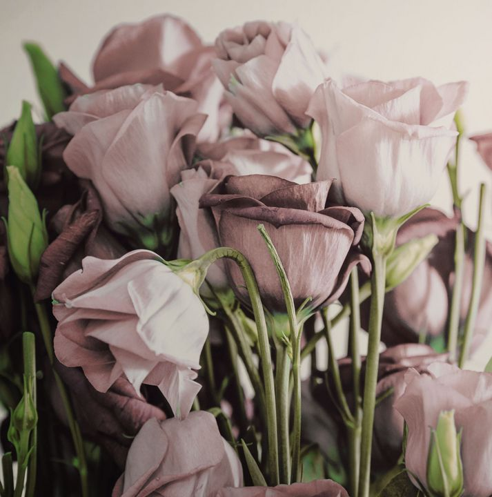 Pink Roses Bouquet - Creative Photography