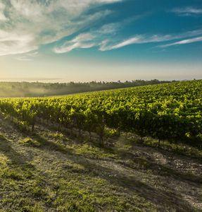 Vineyard photography during summer