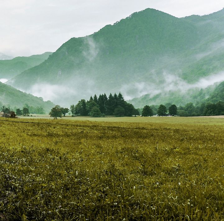 Foggy forest containing landscape - Creative Photography