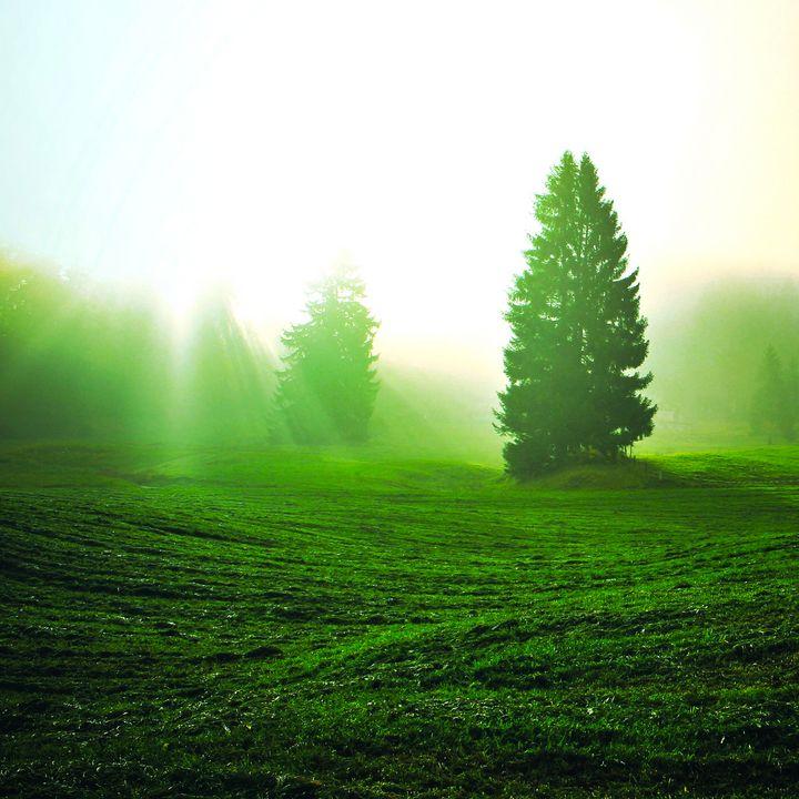 Grassland Meadow Rural Fields - Creative Photography